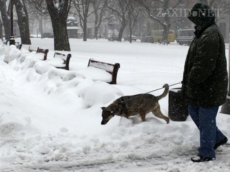 У Києві – низка звільнень через снігові замети