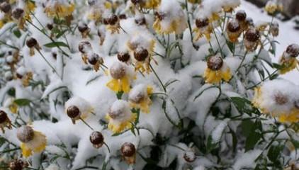 Украинцам пора готовиться к первому снегу, – Укргидрометцентр