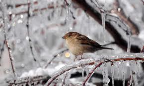 В Україні похолодає до -25