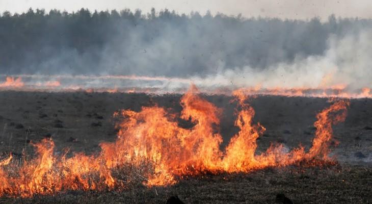 Нардеп Нестеренко оставляет выжженную землю на Днепропетровщине (ВИДЕО)