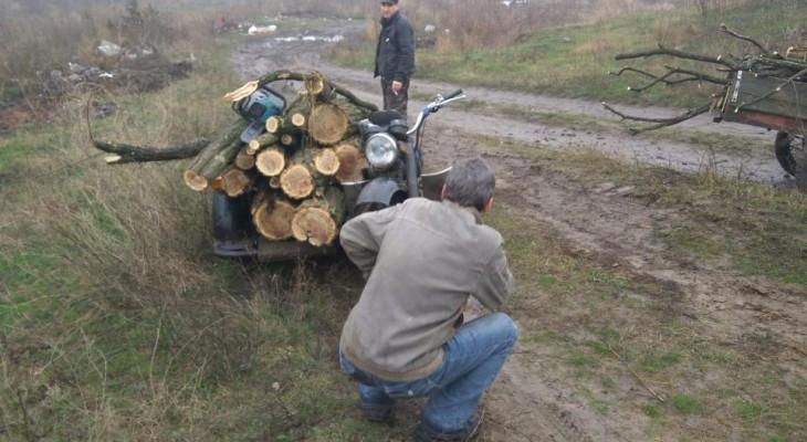 На Новомосковщине пойманы лесорубов (ФОТО)