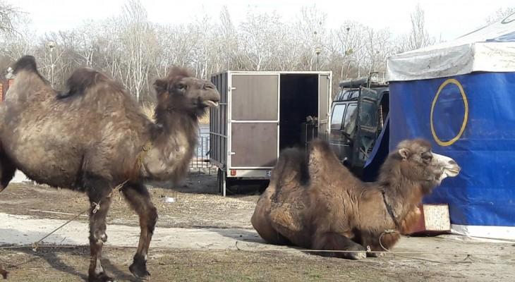В Новомосковске публично издевались над животными