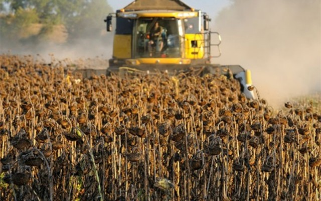 На Дніпропетровщині фермерів, що вирощують соняшник, атакують рейдери «в погонах»