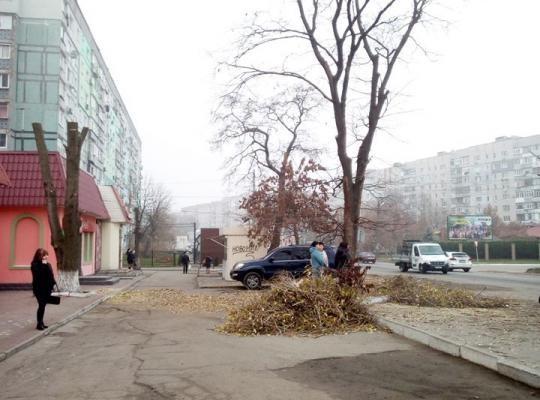 Новые шедевры заботы о деревьях в Новомосковске.