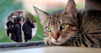 В Харькове женщина убила кошку и пошла с ней гулять по улице (ВИДЕО)