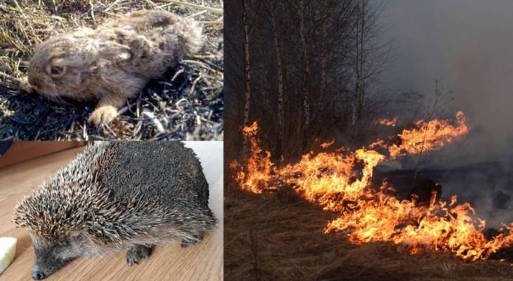 Гине все живе навколо. Шокуючі наслідки спалювання трави. Шокуючі фото