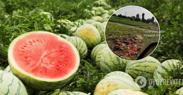На Херсонщине фермеры уничтожили непроданные арбузы.
